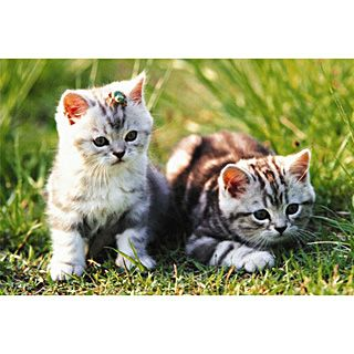 Loveable Kittens